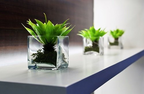 Cube Vases On Office Shelf