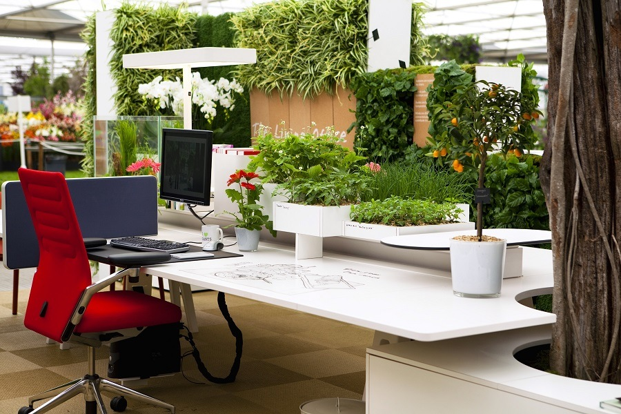Livening Up Your Office Space: Indoor Plants